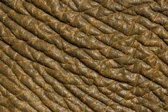 кожа слона тайская Стоковое Изображение RF