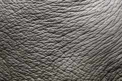 кожа слона Стоковая Фотография