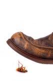 кожа таракана ботинка готовая для того чтобы затоптать Стоковая Фотография RF