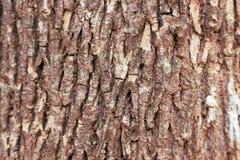 Кожа, текстурированный крупный план, поверхность, деревянная, лес, природа, коричневый цвет, дерево, расшива, предпосылка, тексту Стоковое Изображение RF