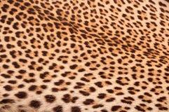 кожа черного коричневого леопарда цвета померанцовая безшовная Стоковые Фотографии RF