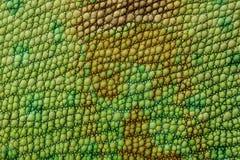 кожа ящерицы Стоковые Фото