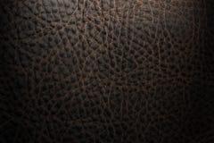 кожа Стоковые Изображения