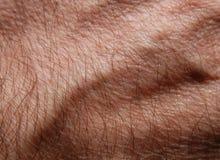 кожа 22 Стоковое Фото
