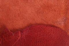 кожа Стоковое фото RF