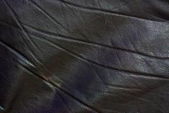 кожа Стоковая Фотография RF