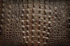 Кожа Brown стоковое фото
