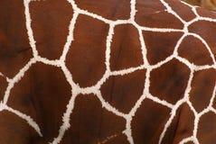кожа giraffe Стоковые Фотографии RF