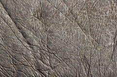 кожа hippopotamus Стоковые Изображения RF