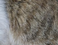 Кожа pets коты Стоковое Изображение