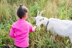 Коза девушки подавая зеленая трава Стоковое Фото