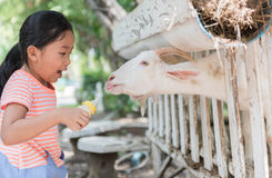 Коза младенца милой девушки фермера подавая с бутылкой молока Стоковое Фото