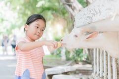 Коза младенца милой девушки фермера подавая Стоковое Изображение RF