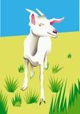 Коза на поле Стоковое Изображение