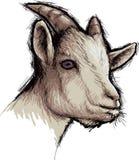 Коза Стоковые Изображения