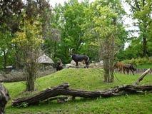 Коза Стоковое Изображение