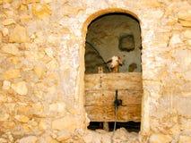 Коза стоковое фото