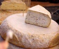 Козий сыр фермы естественный органический белый с травами Стоковые Изображения RF