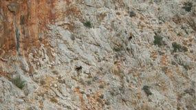 Козочка горы Стоковое фото RF