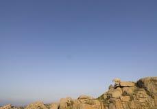 козочка Италия Сардиния одичалая Стоковые Фотографии RF