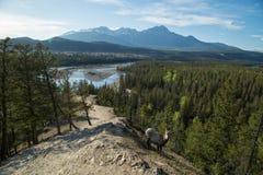 Козочка на горных склонах стоковое изображение