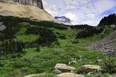 козочки пася гору Стоковое Фото