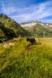 Козы в горах Стоковое Изображение RF