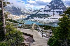 Козы горы и спрятанное озеро, национальный парк ледника, Монтана США Стоковые Изображения