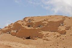 Козы горы Стоковая Фотография