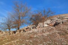 Козы на скалистом холме Стоковое фото RF