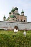 Козы пасут около древних стен монастыря Goritsky Pereslavl-Zalessky Россия Стоковое Изображение