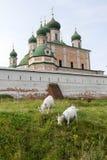 Козы пасут около древних стен монастыря Goritsky Pereslavl-Zalessky Россия Стоковое фото RF