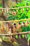 коконы бабочек стоковая фотография rf