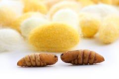 кокон много silk желтый цвет глиста шелкопряда Стоковое фото RF