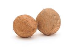2 кокоса Стоковые Изображения RF