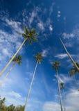 кокоса ладонь вне достигая небеса к валам Стоковые Изображения