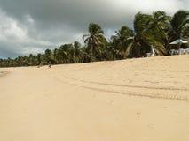 Кокосовая пальма в бразильском пляже стоковое фото rf