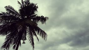 Кокосовая пальма и дождевой лес акции видеоматериалы