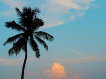 Кокосовая пальма стоковая фотография