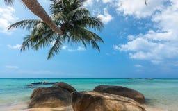 Кокосовая пальма вися над пляжем Стоковые Фотографии RF
