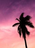 кокосовая пальма во время захода солнца стоковые фото