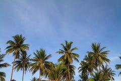 Кокосовая пальма и голубое небо на тропическое прибрежном Стоковые Изображения RF