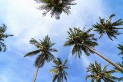 Кокосовая пальма и голубое небо на тропическое прибрежном Стоковое фото RF