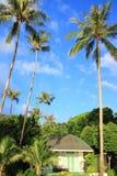 Кокосовая пальма и малая хата на предпосылке голубого неба Стоковые Фотографии RF