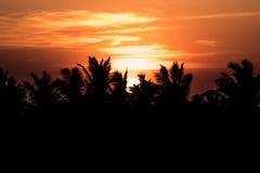 Кокосовая пальма и рис, который хранят на заходе солнца стоковое фото rf