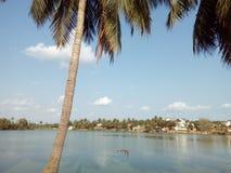 Кокосовая пальма на банке озера Стоковые Изображения