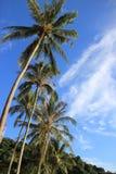 Кокосовая пальма на предпосылке голубого неба Стоковое фото RF