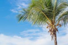 Кокосовая пальма на пляже, летних каникулах Стоковое фото RF