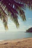 Кокосовая пальма на пляже и море Стоковые Фото