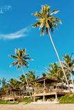 Кокосовая пальма на пляже Стоковое Изображение